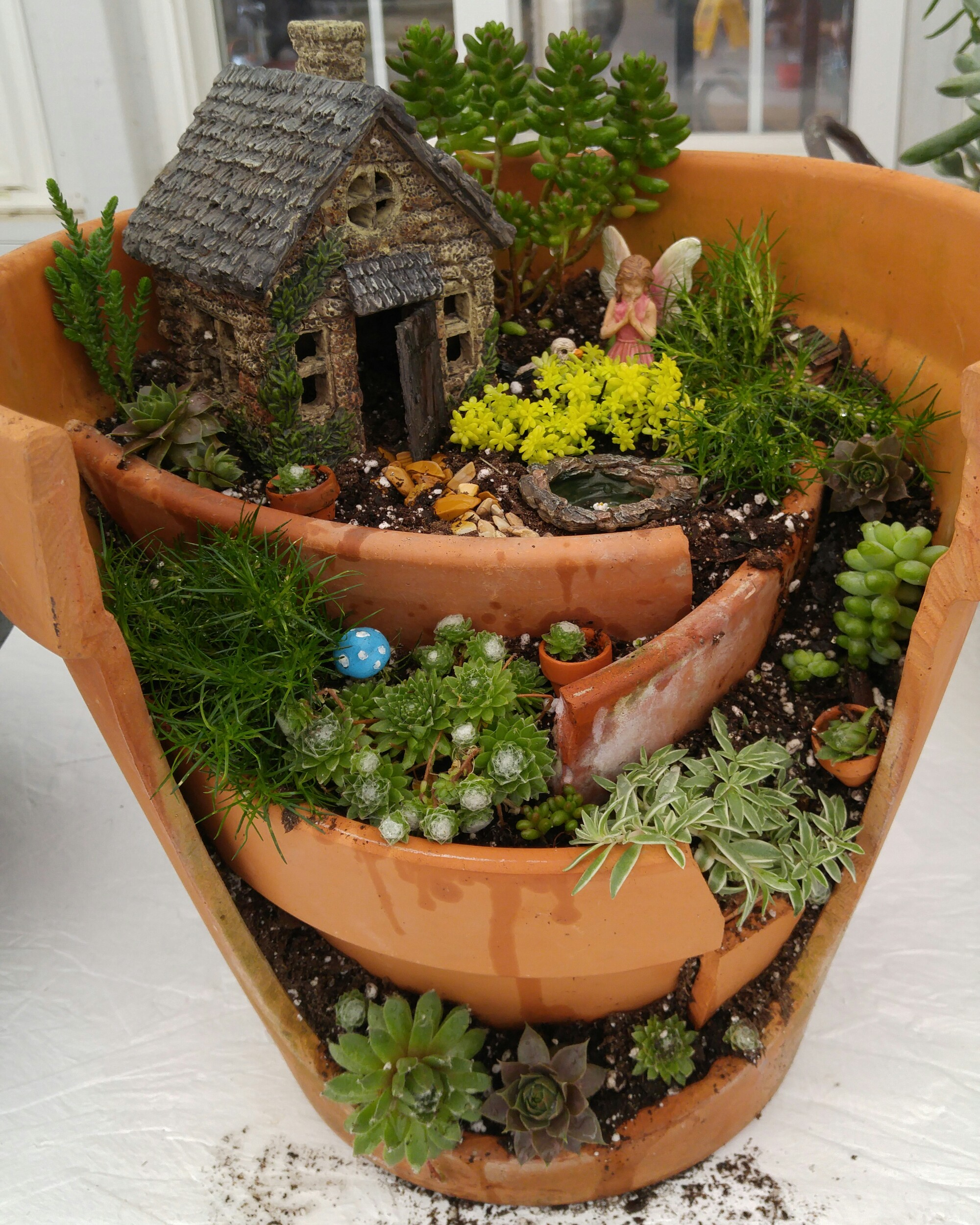 This Gives The Plants A Huge Jump Start, And Allows Them To Establish And  Grow In Your Gardens. To Sign Up For A Fairy Garden Workshop, Click On This  Link.